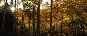 Fall Photos near Blue Lake, September 2012