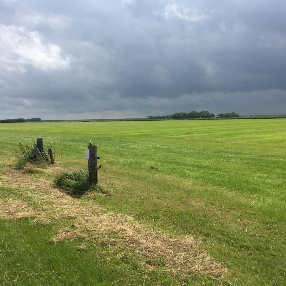groene veld