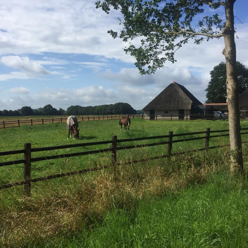 paarden dicht bij Arrien, Overijssel