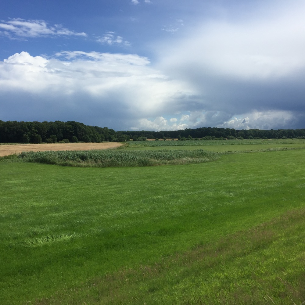groen veld buiten Dalfsen, Overijssel