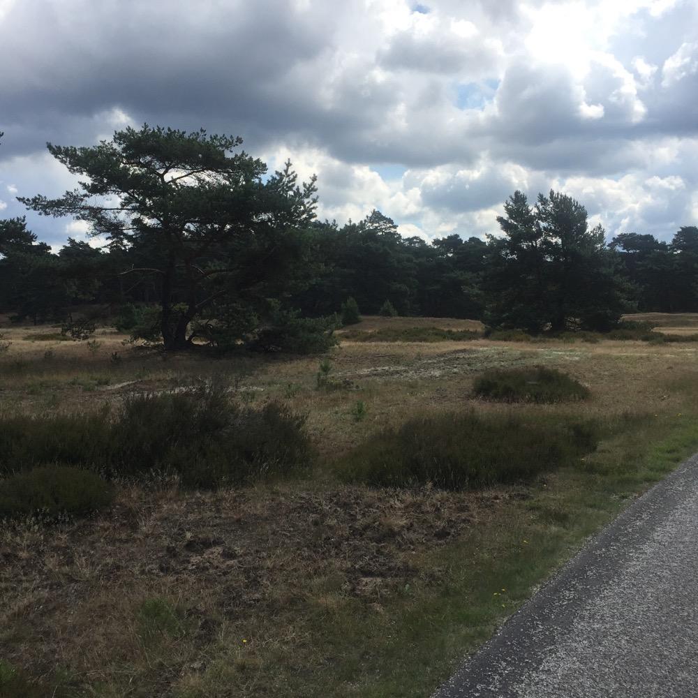 bomen langs fietspad, Veluwe