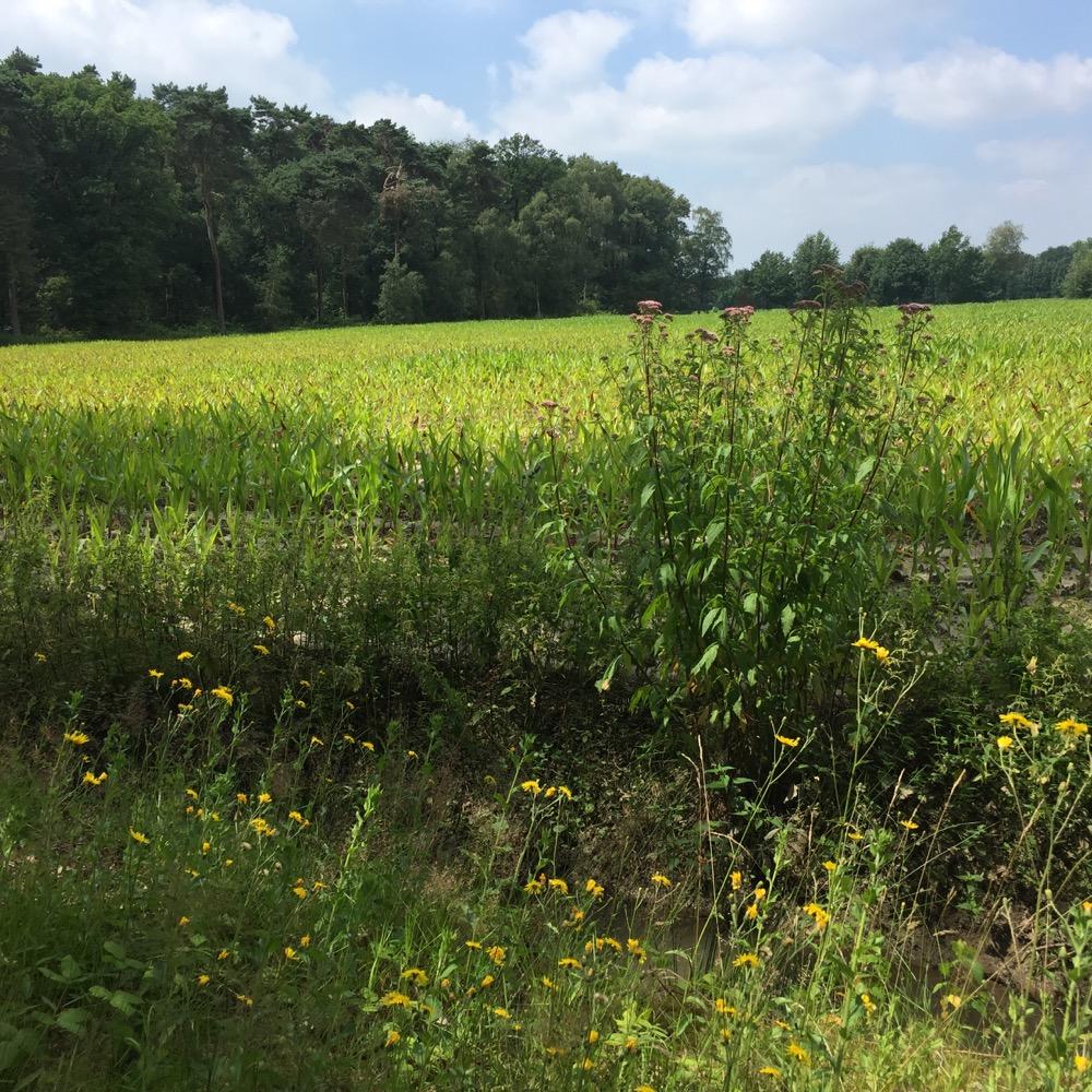 gele-groene veld