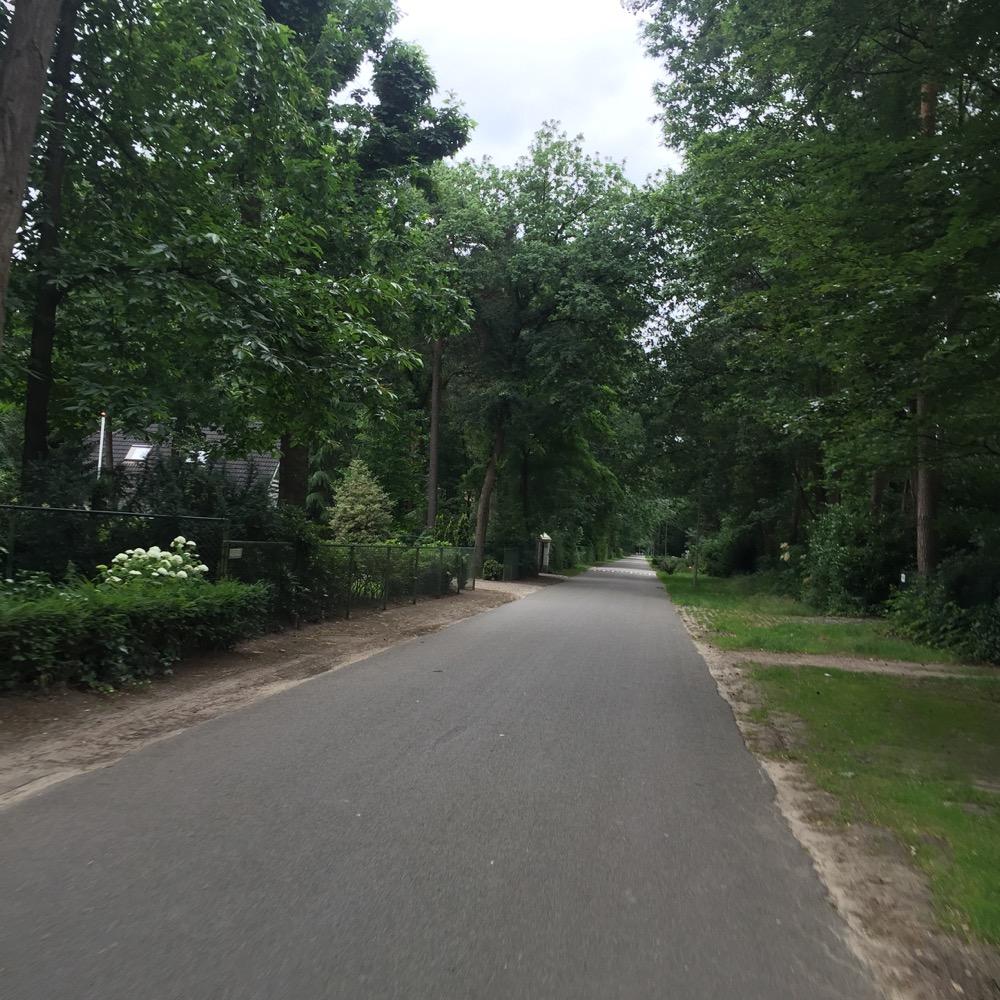 bomen langs weg