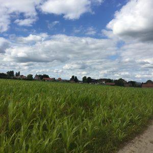 Kruishoutem, Oost-Vlaanderen